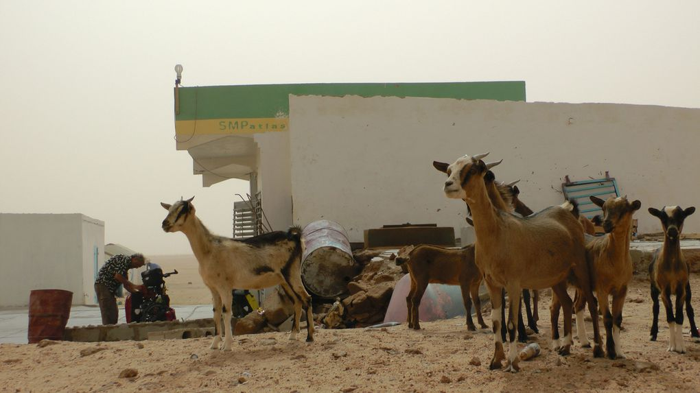 Album - album-photo-Mauritanie