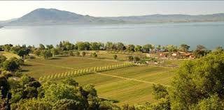 Le vignoble de la région des lacs en Californie