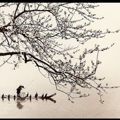 Don Hong-Oai - LANKAART
