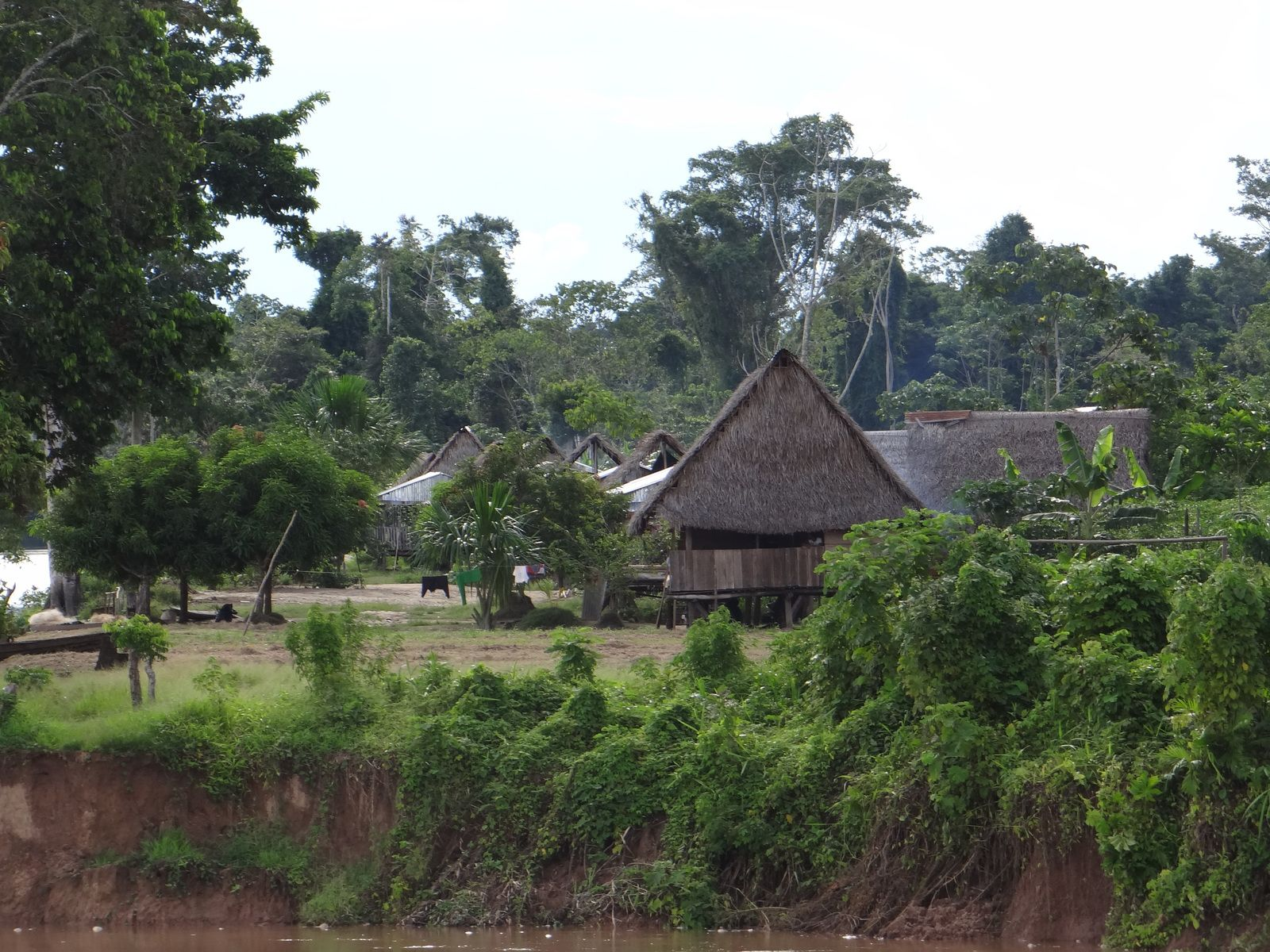 Voyage au PEROU 2014. Chachapoyas. Site de Kuelap. Lagunas. Réserve Pacaya-Samiria. Lancha de Lagunas à Iquitos