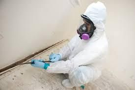 Ways to Find the Right Mold Removal Company