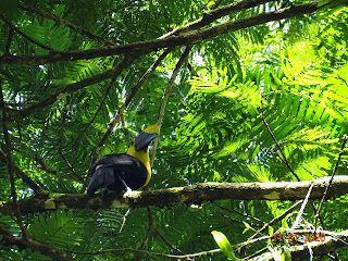 3 semaines au Costa Rica