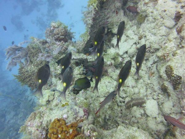 Plongée dans la passe en S à Mayotte le 1er avril, ça il y avait des poissons, si si, mais aucune farce;-)