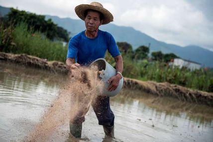 A mort les pesticides: Une agriculture 100 % bio pourrait nourrir la planète en 2050! Un espoir réconfortant, non?