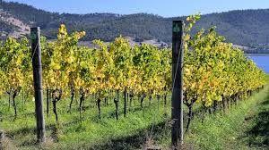 Tasmania and Vine