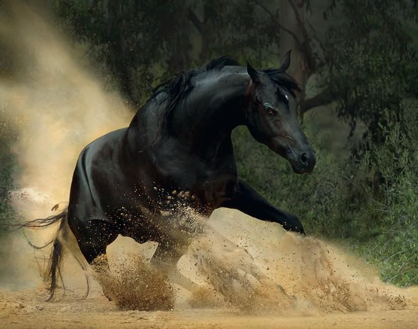 ** Cheval