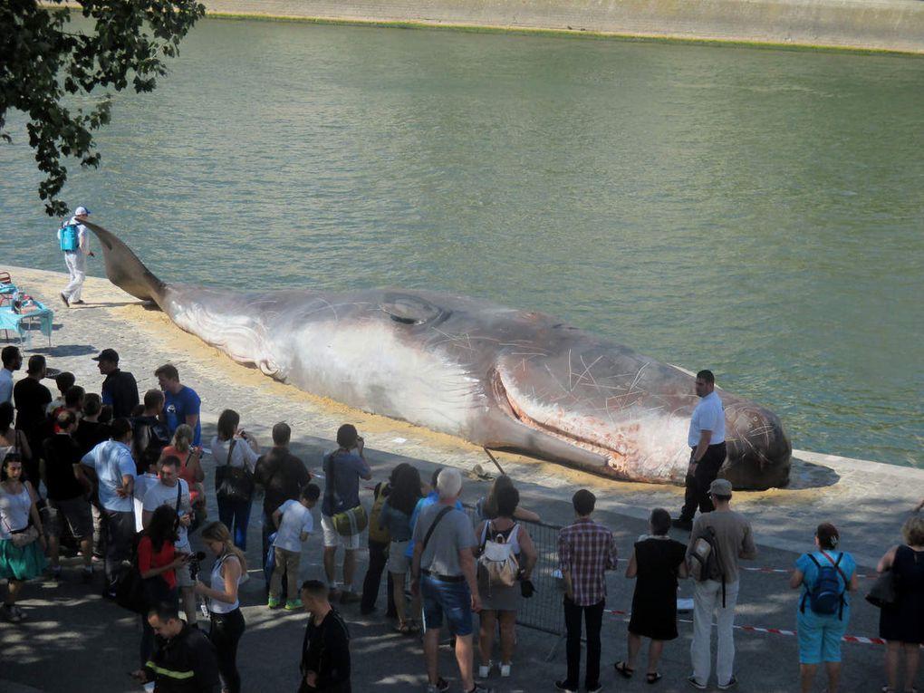 Baleine échouée à Paris, par Captain Boomer