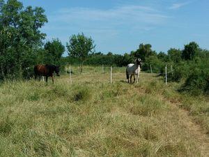 Pré d'été pour les chevaux