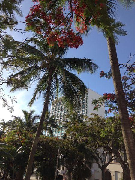 Place des cocotiers ~ Nouméa