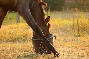 Journée Nutrition Equine à Aclens (Suisse)