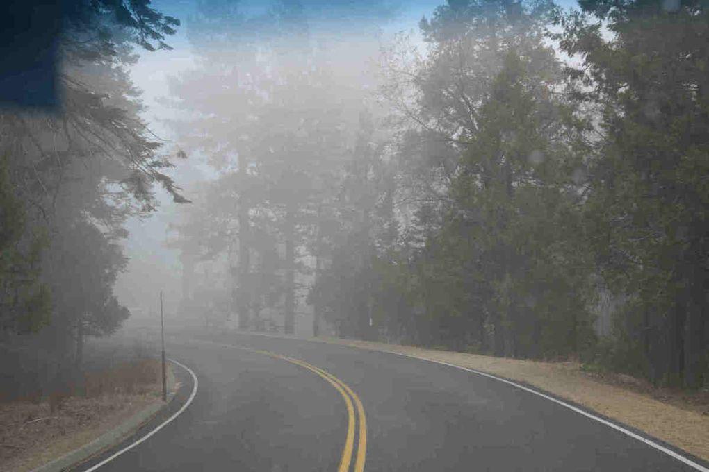 Vallee de la Mort, Sequoia