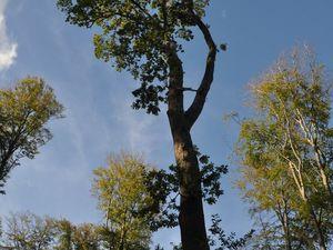 Auprès des hêtres majoritaires, charmes, chênes et résineux ont aussi trouvé place.  (clic sur les photos pour les agrandir).