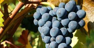 #Pinot Noir Producers Michigan Vineyards p3