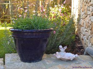 Secteur nord du Jardin de Frescati : bain d'oiseau et tortues