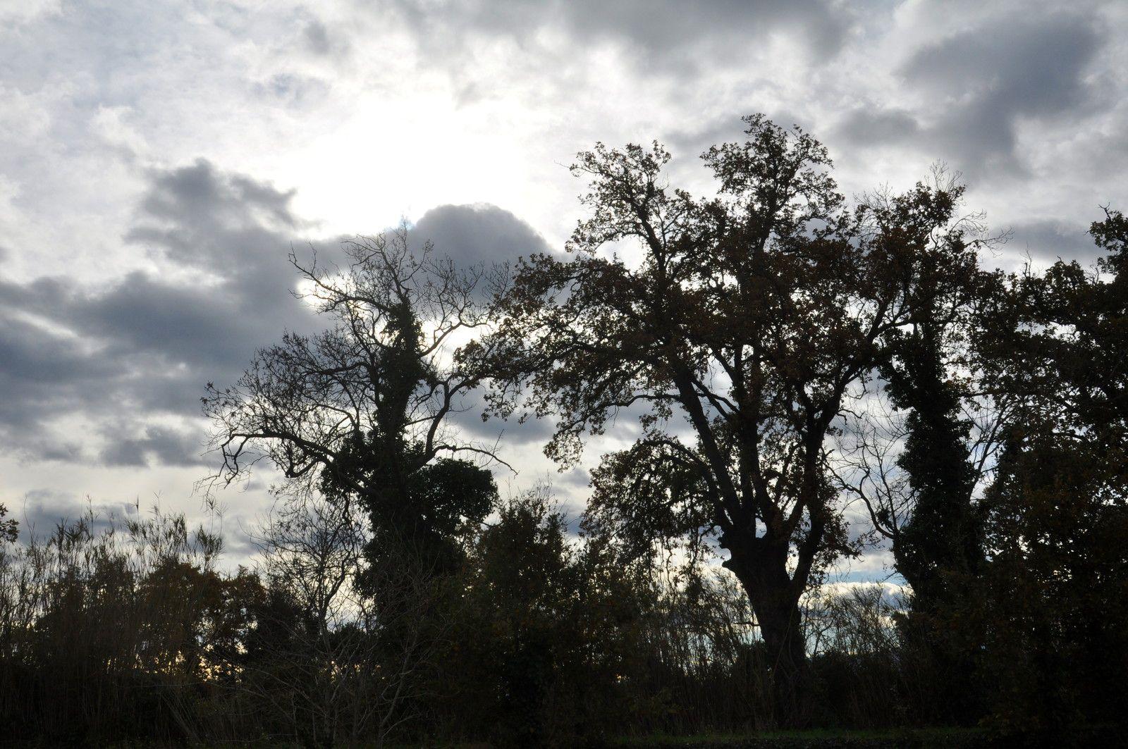 Avec les grands arbres.