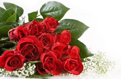 5 Bunga Ulang Tahun untuk sahabat