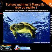 """Table ronde """"Tortues marines à Marseille, rêve ou réalité ?"""" le 18 juillet : inscrivez-vous ! - Aquadomia formation plongée Marseille Paris"""