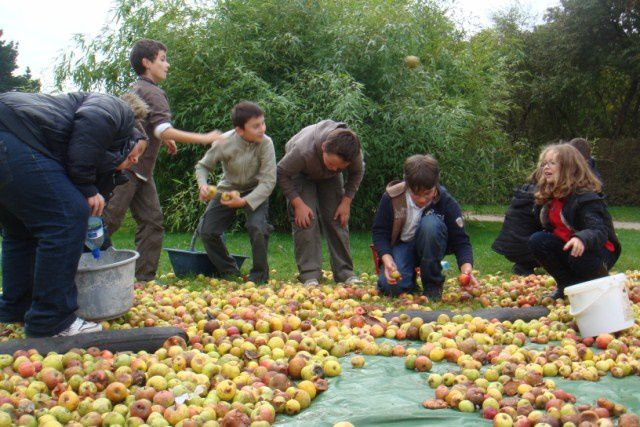 Album - les ce2-et-cm2-fabriquent-du-jus-de-pomme