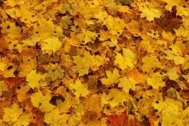 Que faire en automne?What to do in the fall?