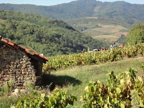 Album - La vigne et le vin