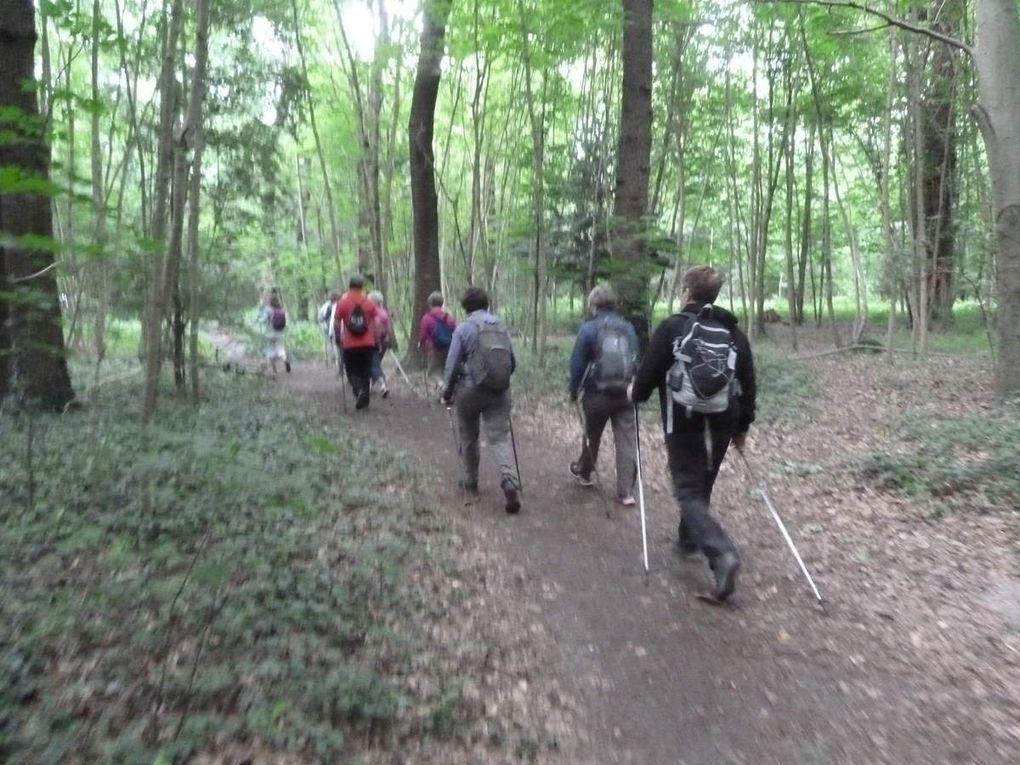 Marche Nordique au bois de Vincennes, 7,5 km.