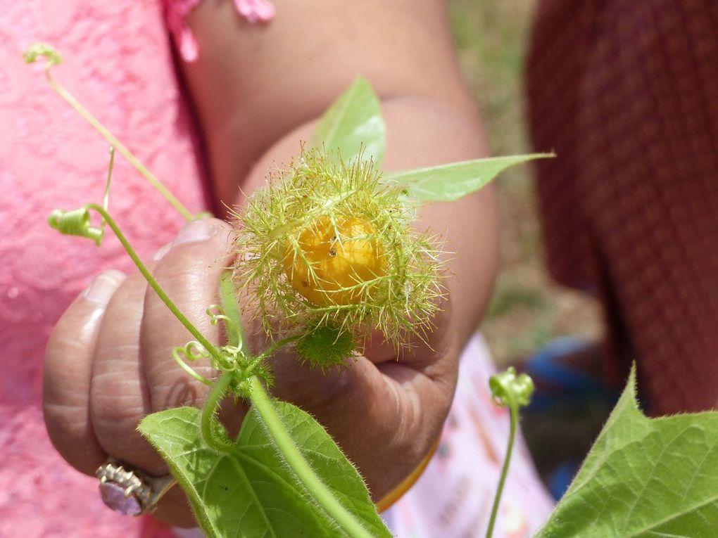 Le tam-lung thong - Fruit de saison (18-13)