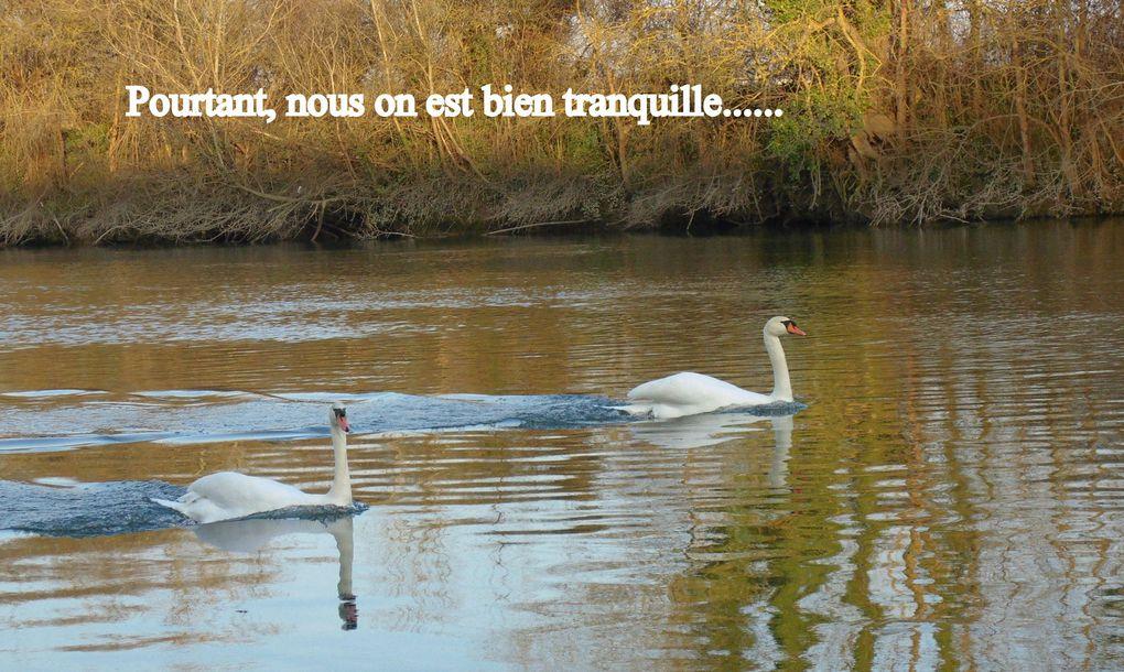 Sur les berges de la Charente, en flânant on se fait de nouveaux amis.. mais cet après-midi.. rien ne fut simple, en effet il y avait une dispute dans la famille..... alors il vallait mieux passer au large.