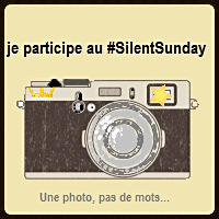 Silent Day #46