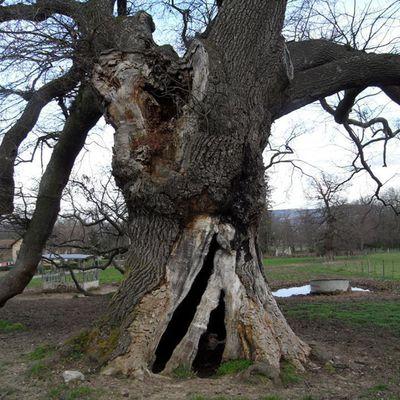au-pied-de-mon-arbre.over-blog.com