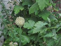 Kräuter für die Küche gedeihen neben blühenden Büschen und GlücklichSein
