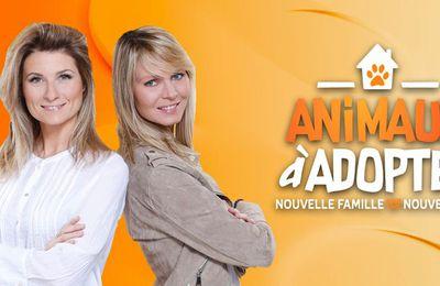 """Le troisième épisode de la saison 3 de """"Animaux à adopter"""" diffusé ce soir sur C8"""
