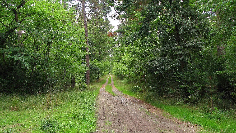 le carrefour du Buisson