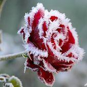 Réchauffement médiatique : Des records de froid battus lors des huit derniers mois ... - MOINS de BIENS PLUS de LIENS