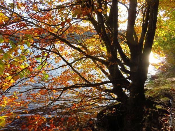 Les jolies couleurs d'automne