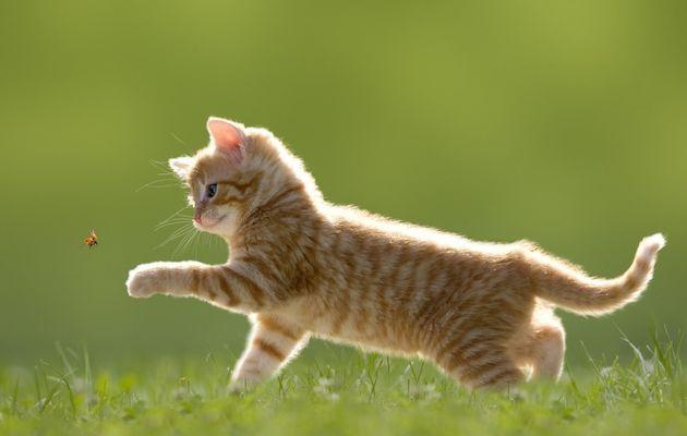 Tiques, puces : la galère des parasites pour votre chat !