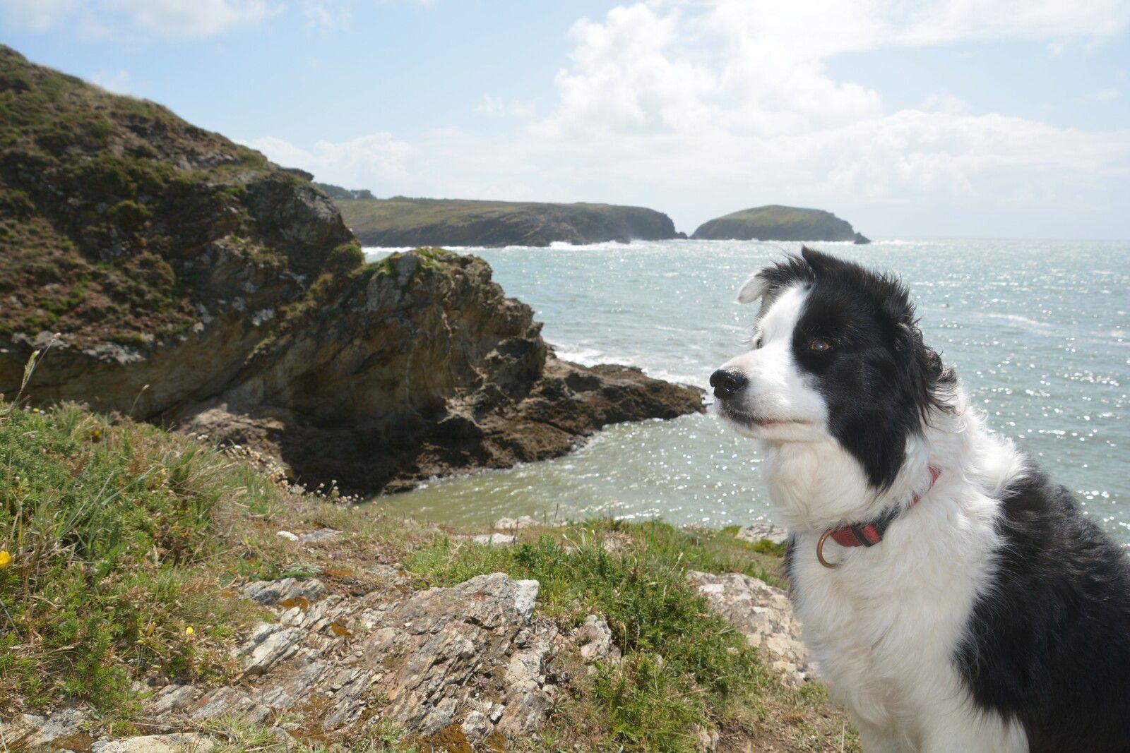 Mila est de l'aventure insulaire.