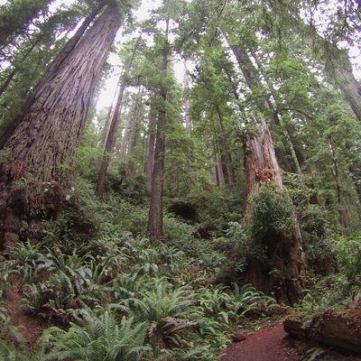 Road trip - step 15 : Redwood