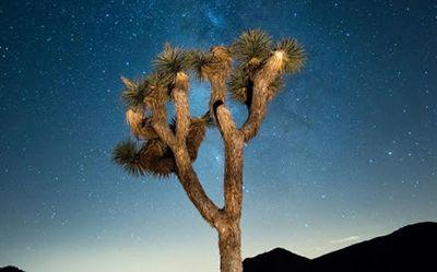 L'été ne s'arrête jamais à Greater Palm Springs