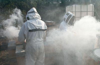 Les apiculteurs sont au travail pour #photodimanche10