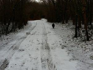 Le pré d'hiver, le chemin de balade qui sépare les champs, et le pré d'en face
