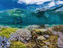 Chasing coral: un documentaire à avoir absolument.