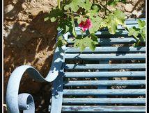Le banc et la rose trémière ...