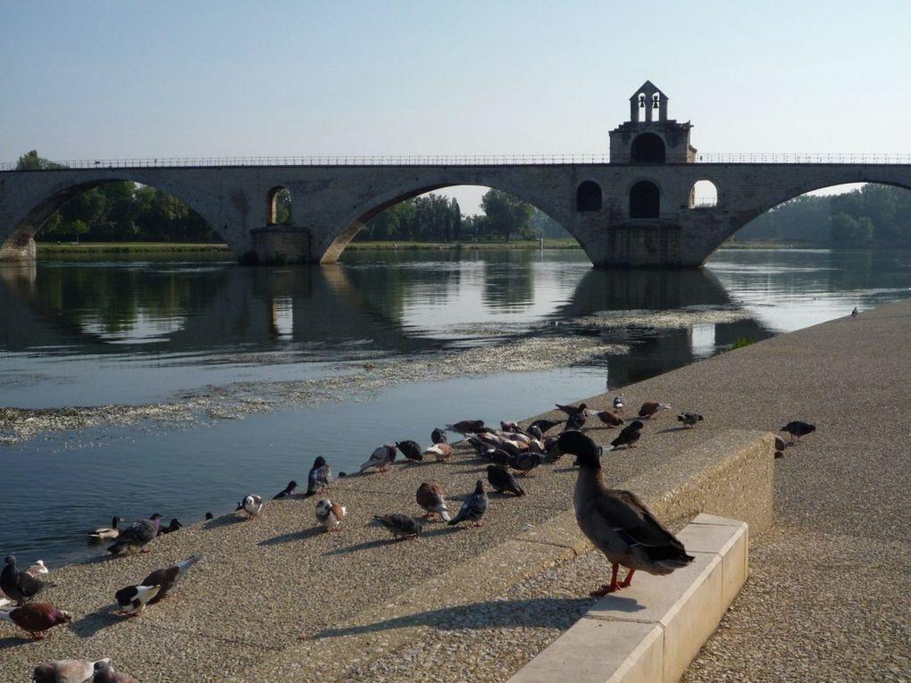 06. Les lieux incontournables d'Avignon (2)