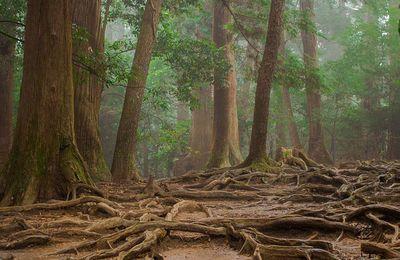 Les arbres partagent leur nourriture entre eux !