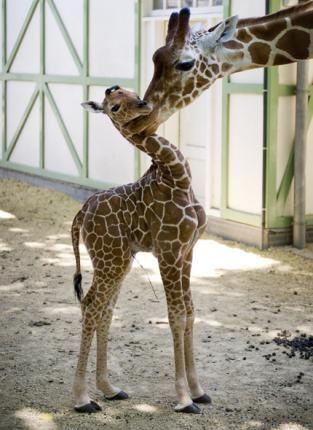 Photos d'animaux