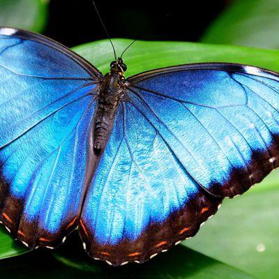 Le papillon, Vincent l'Écrivain, et les autres...