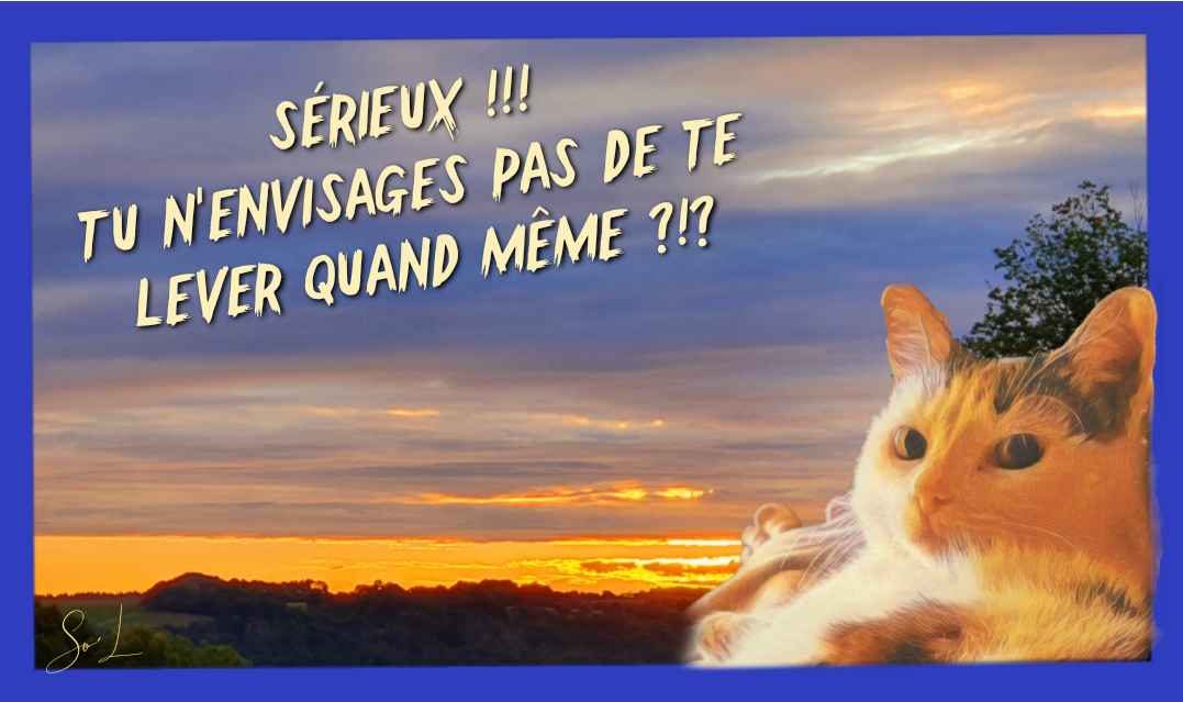 #So'L #Photo #Chat #Humour