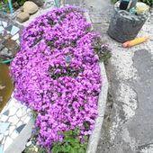 Mes Diverses Plantations - Le blog de Marie-Neige