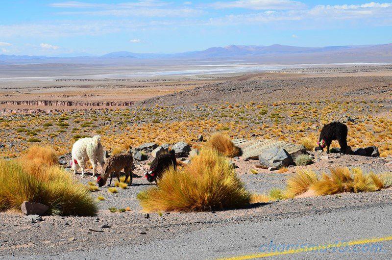 Paso de Jama (Chili en camping-car)