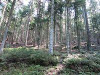 Etape 3: Saverne-Grendelbruch 58 km